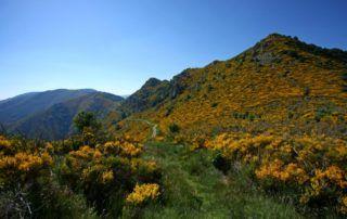 La Souche : Le Mont Aigu