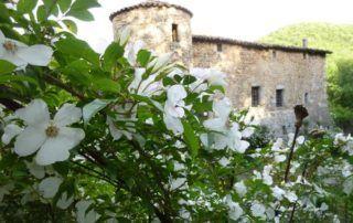Fabras : château du Pin