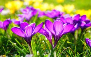 Foire du printemps florale
