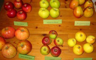 La pomme dans tous ses états