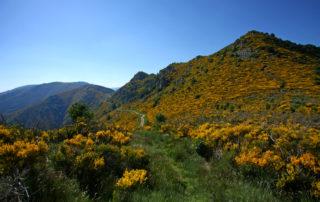 La Souche Mont Aigu