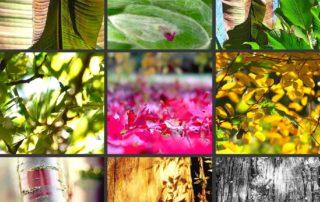 Le végétal vu par Anne Meyrand