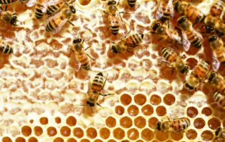 Alvéoles et miel