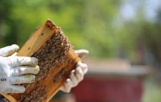 Apiculteurs et miel