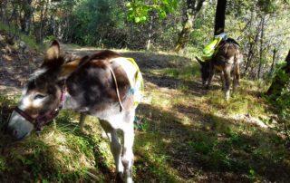 merveilleux week-end ardèche, merveilleuse activité, randonnée avec ânes