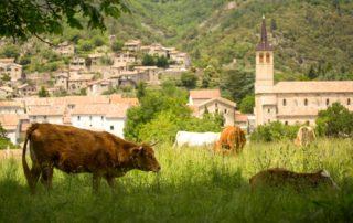 Jaujac - Vaches à Rochemure-2 ©S.BUGNON