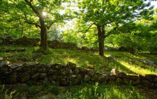 La Souche - Terrasses et châtaigniers ©S.BUGNON