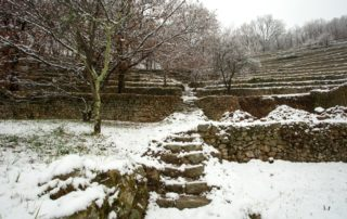 Saint-Pierre-de-Colombier - Terrasses sous la neige ©S.BUGNON