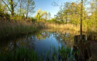 Dragonflies' pond