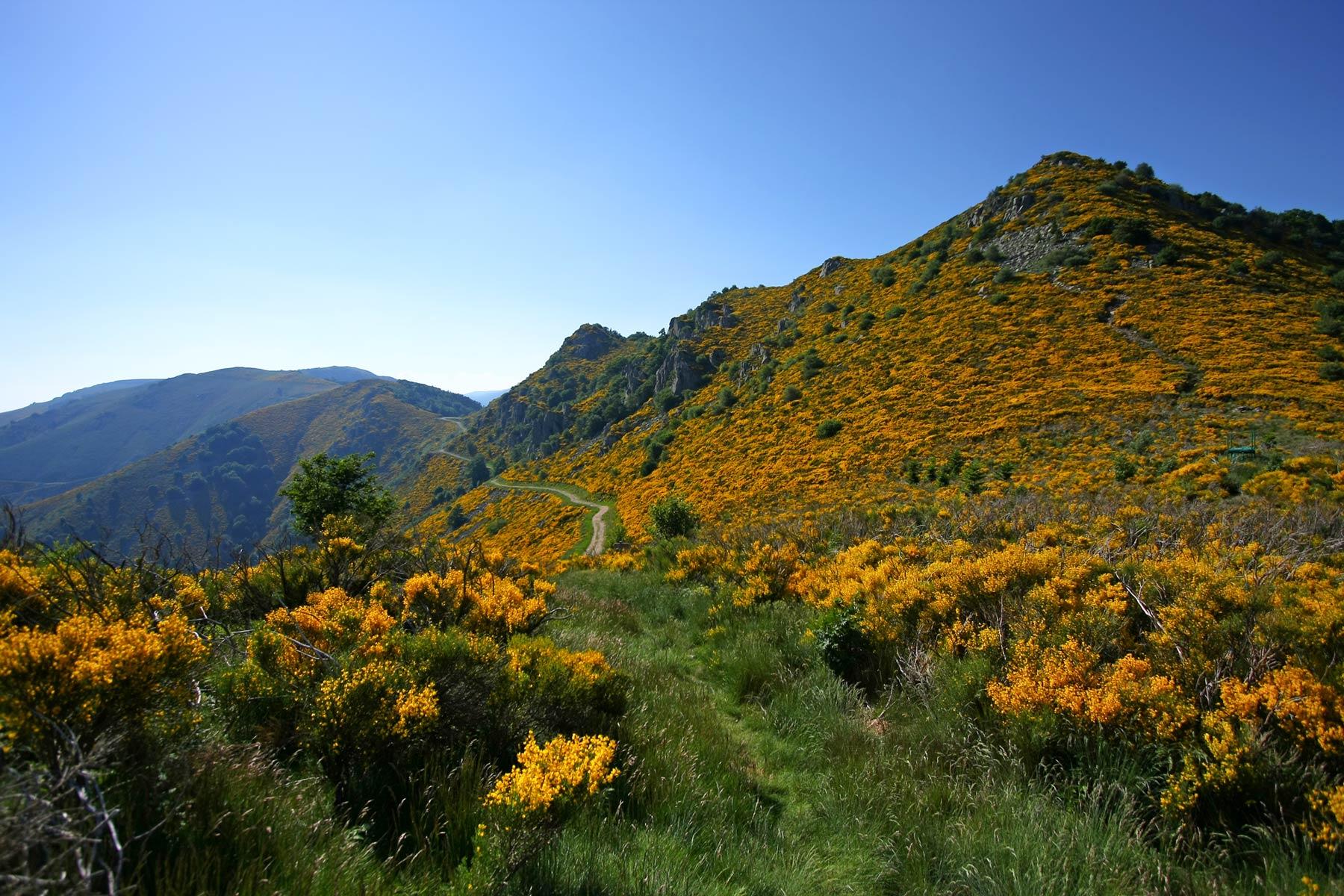 La Souche - Le Mont Aigu